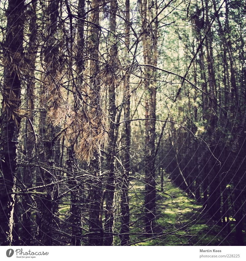 for example last year in summer Environment Nature Plant Forest Relaxation Moss Tree Coniferous forest Colour photo Exterior shot Polaroid Deserted Light