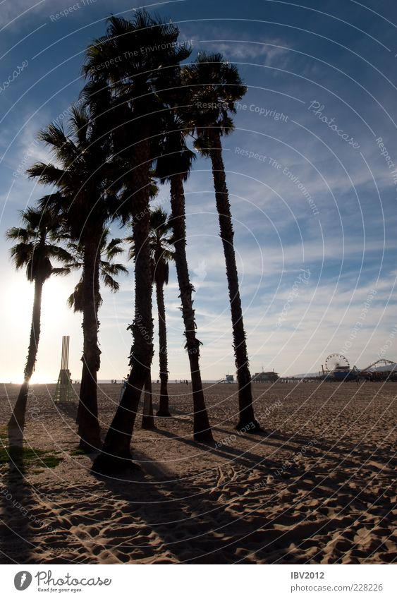 Sky Sun Vacation & Travel Beach Ocean Clouds Sand Tourism USA Footprint Americas Palm tree Jetty Sightseeing California Amusement Park