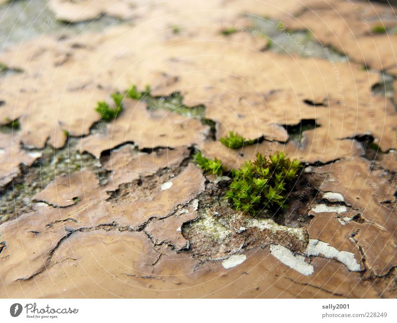 Nature is coming back... Plant Moss Wall (barrier) Wall (building) Growth Old Natural Trashy Green Power Life Survive Environment Decline Transience Change