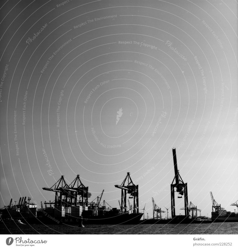 The mighty animals with metal claws. Cloudless sky River Harbour Logistics Container ship Metal Gigantic Town Gray Black Crane Industrial Photography Hamburg