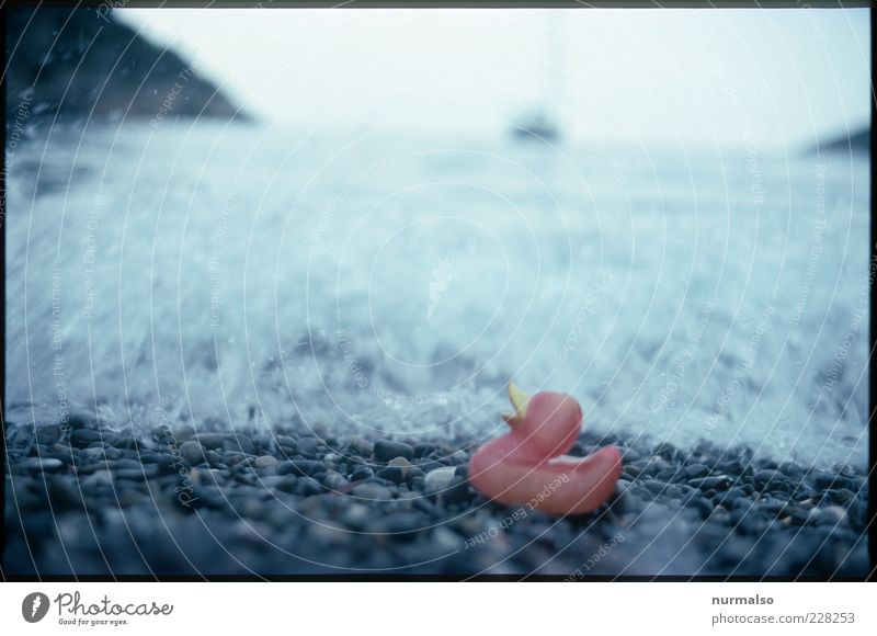 left alone Beach Ocean Waves Nature Elements Water Climate Climate change Coast Quitscheente Squeak duck Trashy Gloomy Moody Stranded Stone Bleached Morning