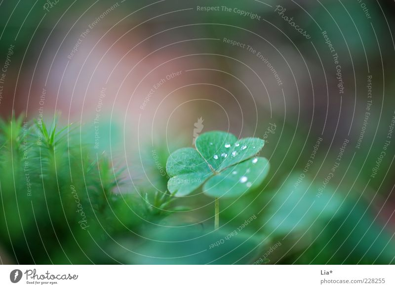 In the fairytale forest Environment Nature Plant Cloverleaf Growth Authentic Fantastic Green Happy Attentive Calm Hope Good luck charm Colour photo