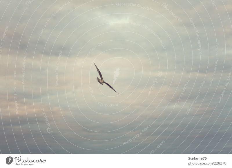 Bird flying high Sky Beautiful Joy Animal Movement Happy Moody Bird Contentment Power Elegant Flying Wild Natural Wild animal Energy
