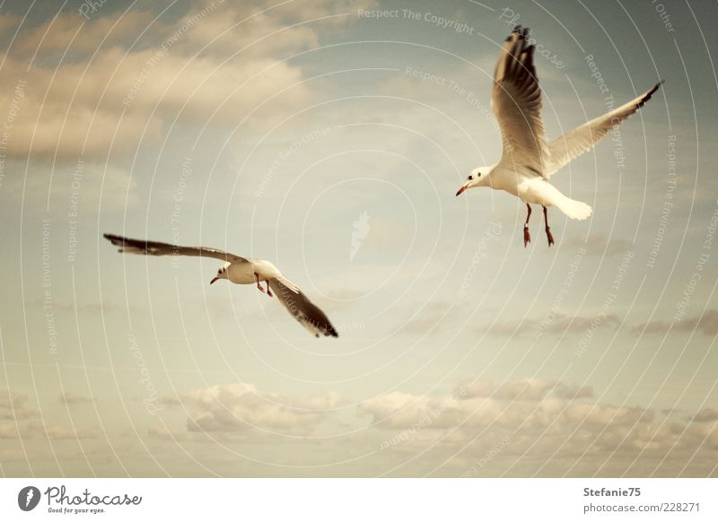 The Gulls Nature Animal Elements Earth Air Sky Clouds Summer Beautiful weather Wind Coast Beach Ocean Wild animal Bird gull 2 Movement Rotate Flying To enjoy