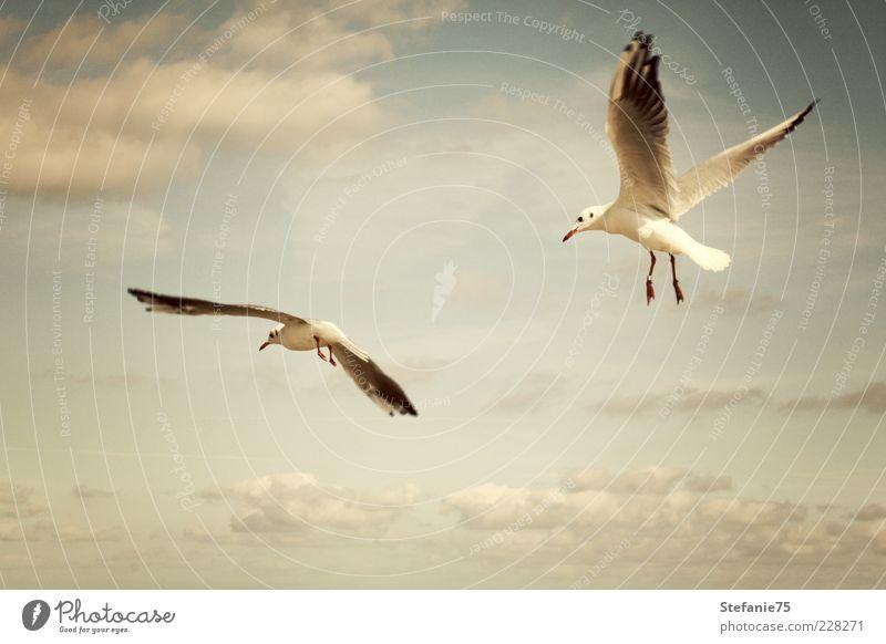 The Gulls Nature Beautiful Sky Ocean Summer Joy Beach Clouds Animal Movement Air Together Bird Coast Wind Elegant