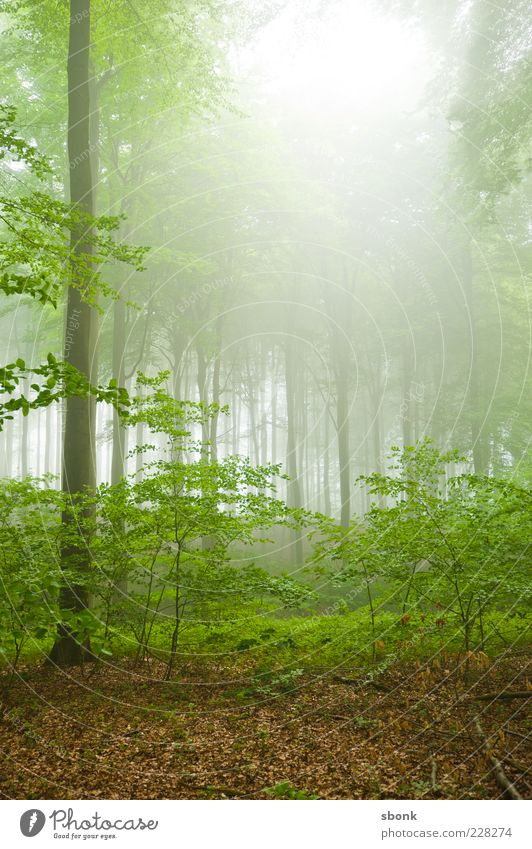forest Environment Nature Landscape Plant Summer Fog Tree Bushes Virgin forest Green Forest Morning Deserted Back-light Hollow Light (Natural Phenomenon)