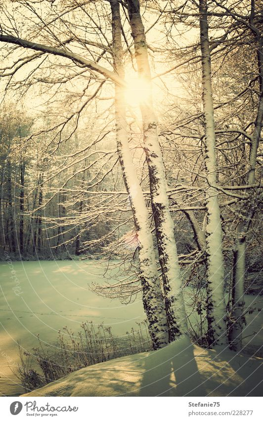 Winter Sun Nature Landscape Elements Sunlight Beautiful weather Ice Frost Snow Tree Grass Park Forest River Breathe Think Freeze To enjoy Dream Cool (slang)