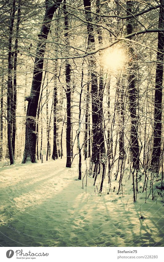 Sparkling Nature Beautiful White Tree Sun Plant Joy Winter Forest Cold Snow Park Think Landscape Ice Earth