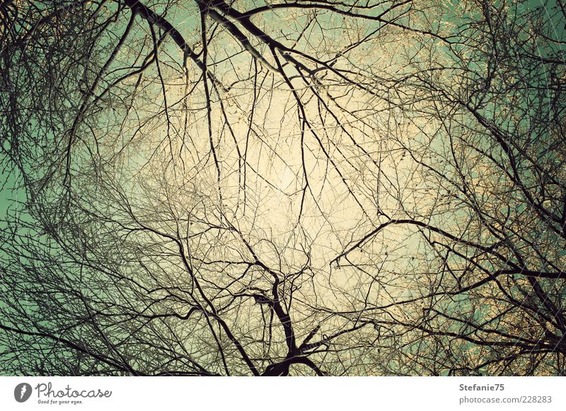Winter Branches Sky Nature Beautiful Tree Sun Joy Cold Freedom Above Air Think Dream Ice Earth Fresh