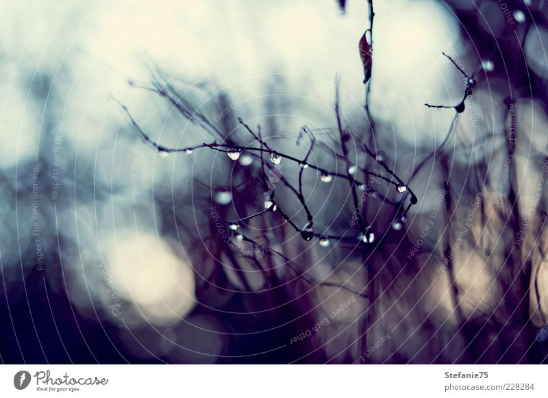 Little Diamonds Nature Water Tree Joy Winter Emotions Spring Garden Rain Bushes Drops of water Simple Romance Beautiful weather Elements Might