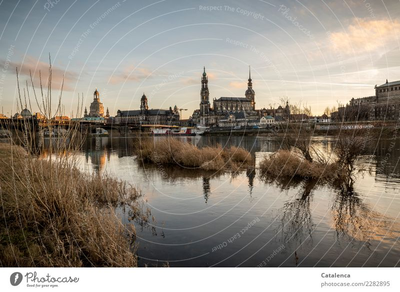 thresh Tourism Winter Water Beautiful weather Grass Bushes River bank Elbe Saxony Dresden Town Capital city House (Residential Structure) Church Dome Bridge