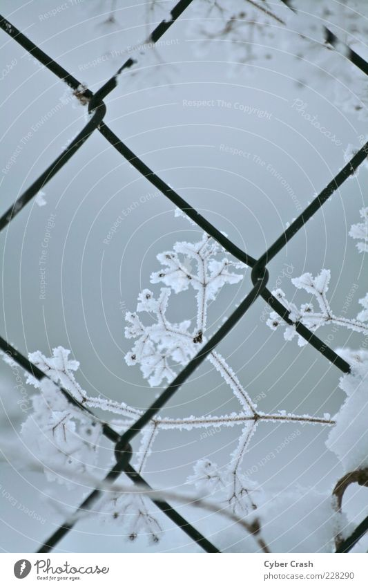 Crystal on wire mesh fence Plant Winter Ice Frost Snow Grass Bushes Wild plant Subdued colour Exterior shot Macro (Extreme close-up) Twilight Deserted Frozen