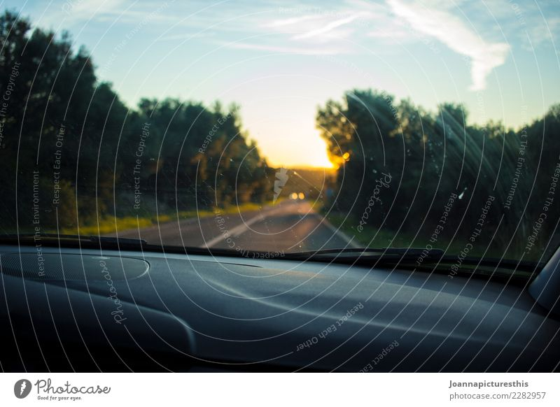 road trip Trip Adventure Far-off places Freedom Landscape Sunrise Sunset Summer Beautiful weather Forest Means of transport Traffic infrastructure Street Car