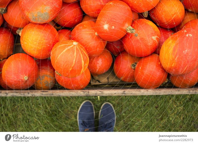 Hello pumpkins Vegetable Pumpkin Pumpkin time Hokkaido Organic produce Vegetarian diet Shopping Healthy Eating Garden Thanksgiving Hallowe'en Gardening