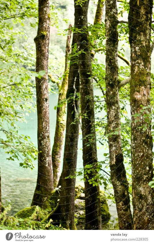 Nature Tree Plant Summer Leaf Forest Environment Natural Climate Lakeside Tree trunk