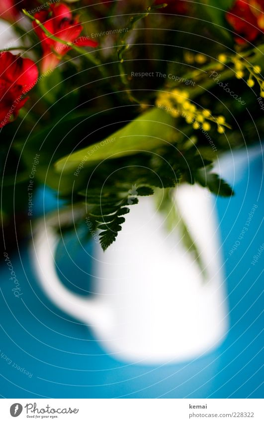 White Green Beautiful Plant Red Flower Leaf Blossom Table Blossoming Bouquet Turquoise Fragrance Jug Porcelain Water jug