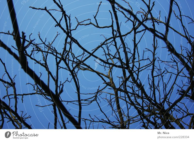 Nature Blue Winter Environment Wood Growth Branch Network Twig Muddled Branchage Twigs and branches Leafless