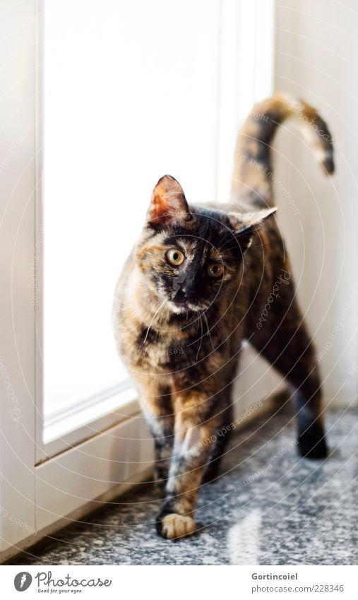 Animal Cat Baby animal Happiness Cute Curiosity Friendliness Pelt Pet Brash Paw Tails Domestic cat Window board Kitten Cat eyes