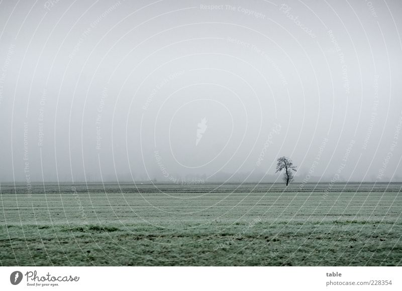 Sky Nature Green Tree Plant Winter Loneliness Far-off places Cold Meadow Autumn Environment Landscape Gray Grass Weather