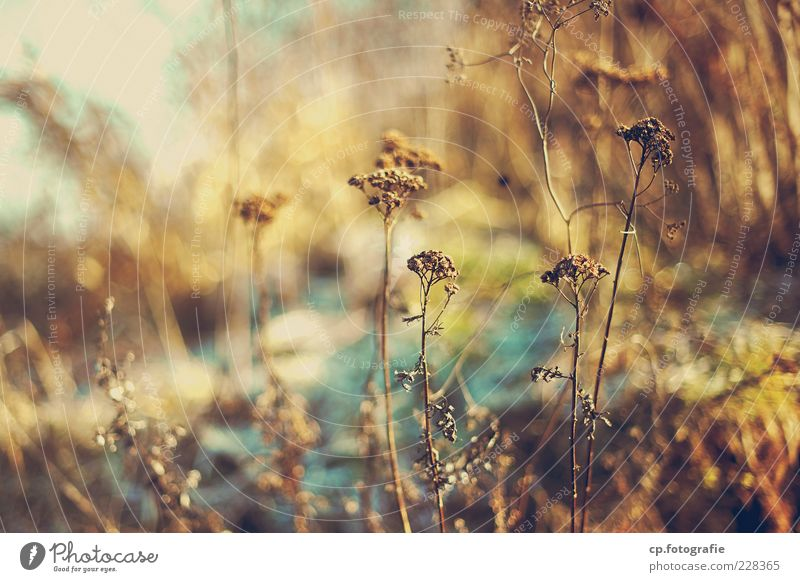candy_World Nature Plant Sunlight Winter Grass Wild plant Meadow Natural Day Light Shadow Contrast Shallow depth of field Bushes Dry Deserted Blur Autumnal