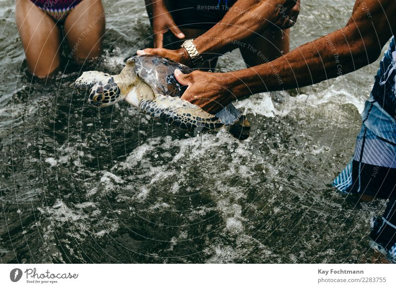 Captured sea turtle Leisure and hobbies Fishing (Angle) Vacation & Travel Tourism Adventure Far-off places Summer Summer vacation Beach Ocean Human being Life