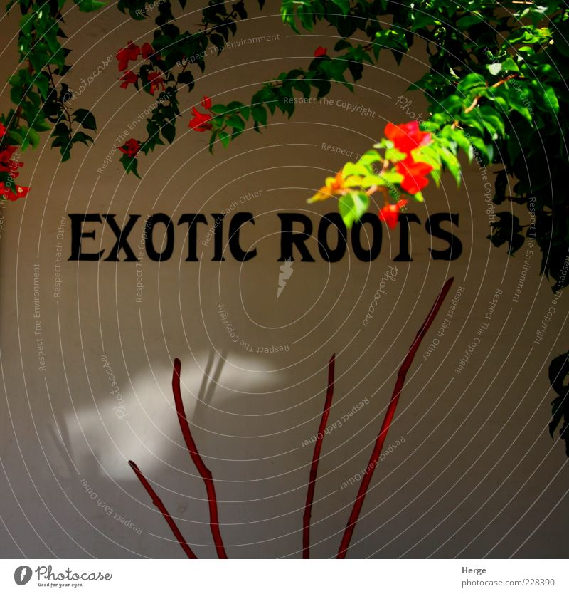 exotic roots Green Red Vacation & Travel Bright Kitsch Sign