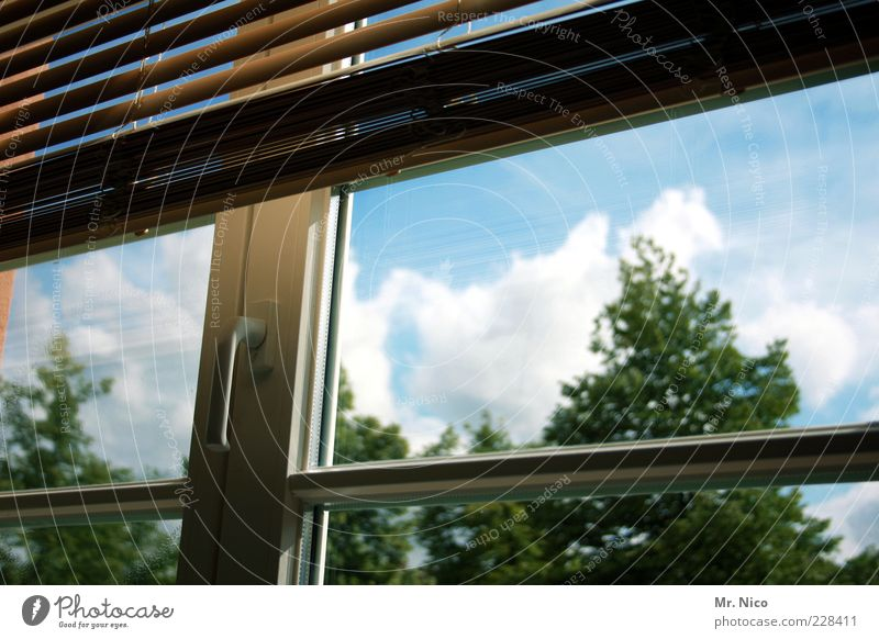 window in the skies Window Clean Transparent Window pane Roller blind Venetian blinds Closed Lattice window Pane Clouds Light Protection Colour photo Treetop