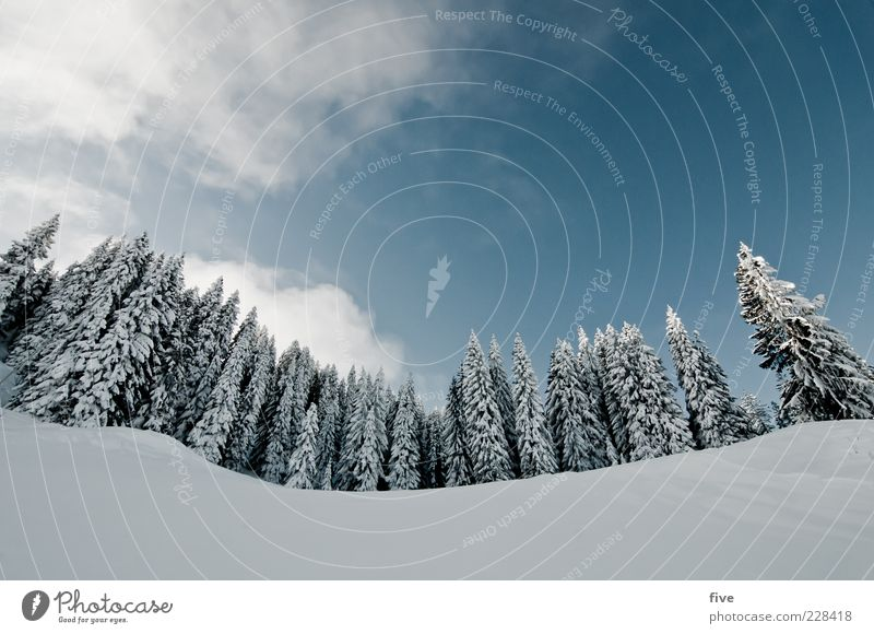 for carlitos with lens correction Ski run Nature Sky Clouds Winter Weather Beautiful weather Snow Plant Tree Forest Hill Alps Mountain Cold Treetop Colour photo