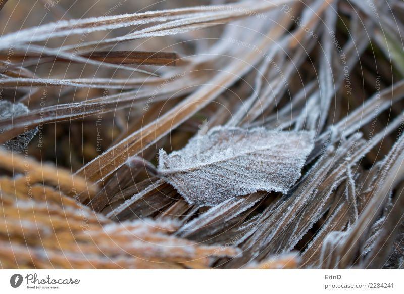 Single Frost Covered Leaf Sits in Grasses Design Beautiful Harmonious Calm Vacation & Travel Adventure Sun Winter Nature Landscape Plant Autumn Ice Freeze