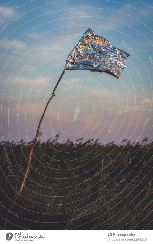 Golden flag reflecting Beautiful Leisure and hobbies Playing Vacation & Travel Tourism Summer Club Disco Sports Golf Retirement Nature Landscape Plant Sky Grass