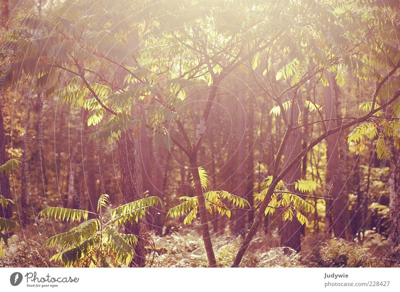 Nature Green Beautiful Tree Plant Sun Summer Leaf Calm Forest Relaxation Life Autumn Environment Landscape Warmth