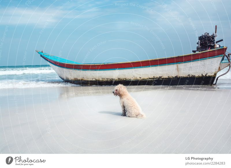 Beach doggy with boat Exotic Beautiful Vacation & Travel Tourism Summer Ocean Island Decoration Nature Landscape Sand Coast Transport Watercraft Wood Rust Old