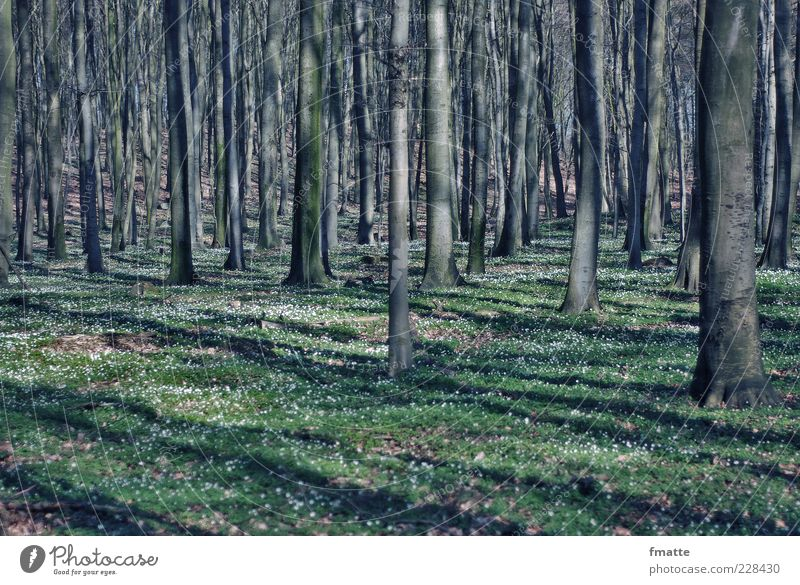 forest Environment Nature Landscape Plant Spring Tree Sign Colour photo Subdued colour Exterior shot Copy Space bottom Day Light Shadow Deep depth of field