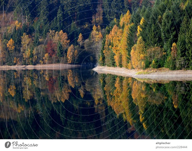 Indian Summer in the Franconian Forest Environment Nature Landscape Plant Water Autumn Beautiful weather Tree Lakeside Reservoir Germany Idyll Reflection