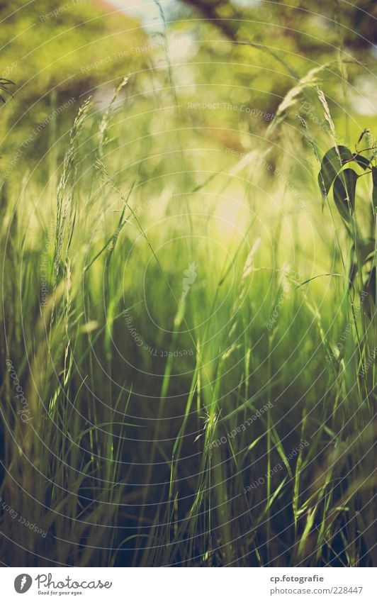 oasis Nature Plant Sun Sunlight Summer Beautiful weather Grass Foliage plant Meadow Soft Day Light Shadow Shallow depth of field Worm's-eye view Blade of grass