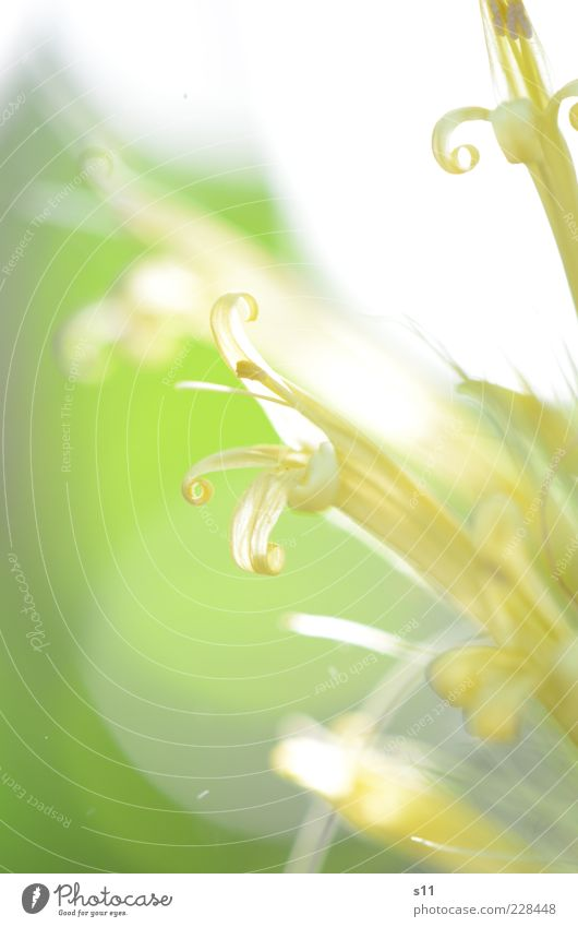 Nature White Green Beautiful Plant Flower Summer Leaf Yellow Blossom Spring Small Bright Power Glittering Elegant