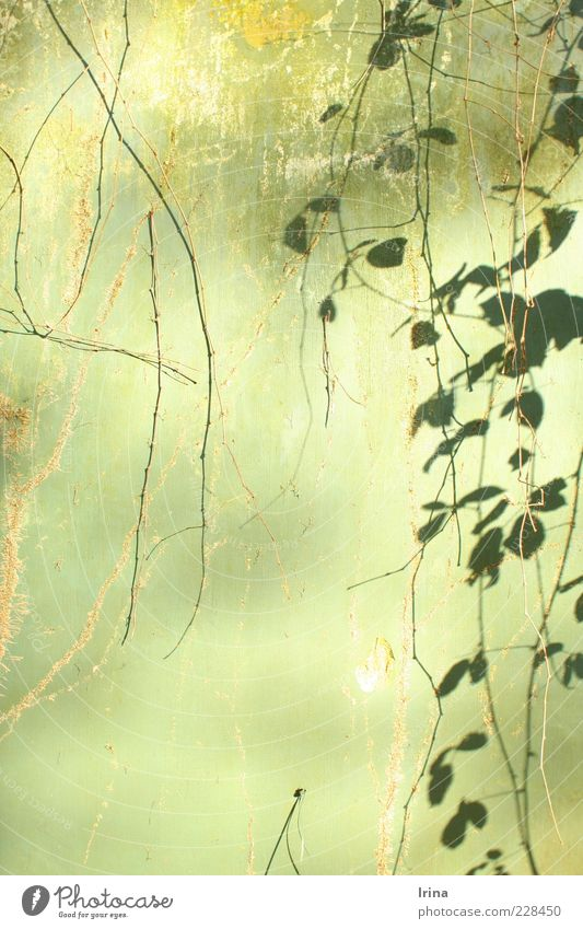 Nature Old Green Plant Leaf Esthetic Change Exotic Ivy Tendril Twigs and branches Bochum