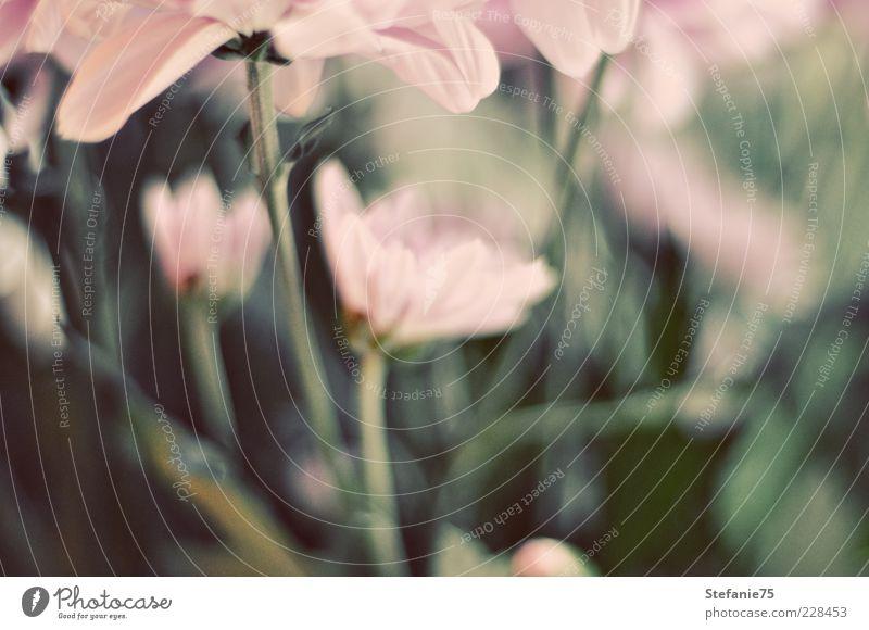 Garden Nature Green Beautiful Plant Summer Joy Flower Leaf Colour Emotions Happy Spring Pink Design Fresh Esthetic