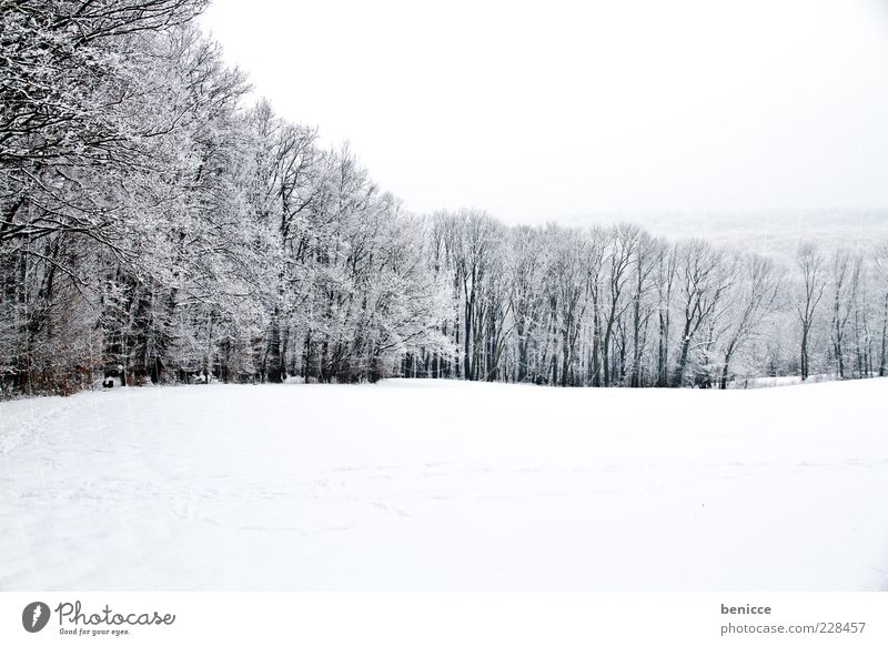 Nature Tree Winter Forest Cold Snow Row Snowscape Panorama (Format) Clearing Edge of the forest Winter forest