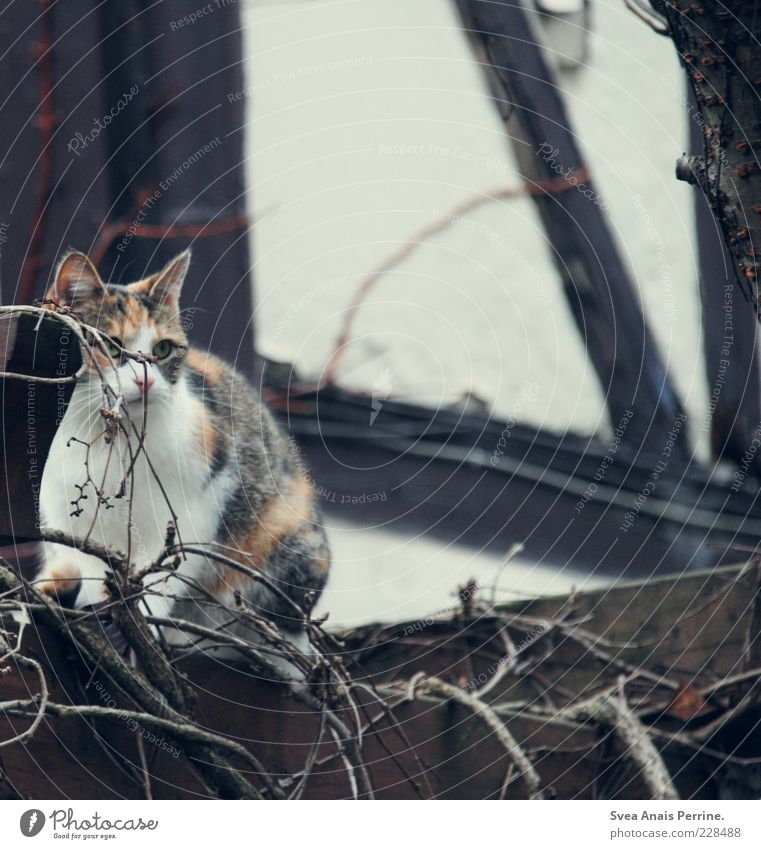 Beautiful Animal Wall (building) Garden Cat Wall (barrier) Contentment Sit Observe Branch Hide Fear of the future Pet Twigs and branches