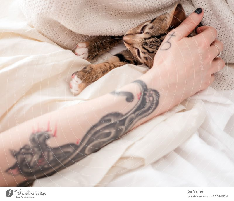 414 [two cats] Living or residing Young woman Youth (Young adults) Woman Adults Skin Arm Hand Youth culture Subculture Tattoo Pet Cat Claw Paw Animal Sign
