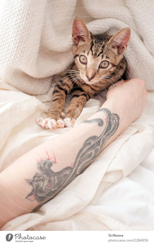 413 [two cats] Skin Living or residing Young woman Youth (Young adults) Woman Adults Arm Subculture Tattoo Cat Paw Animal Observe Touch Lie Playing