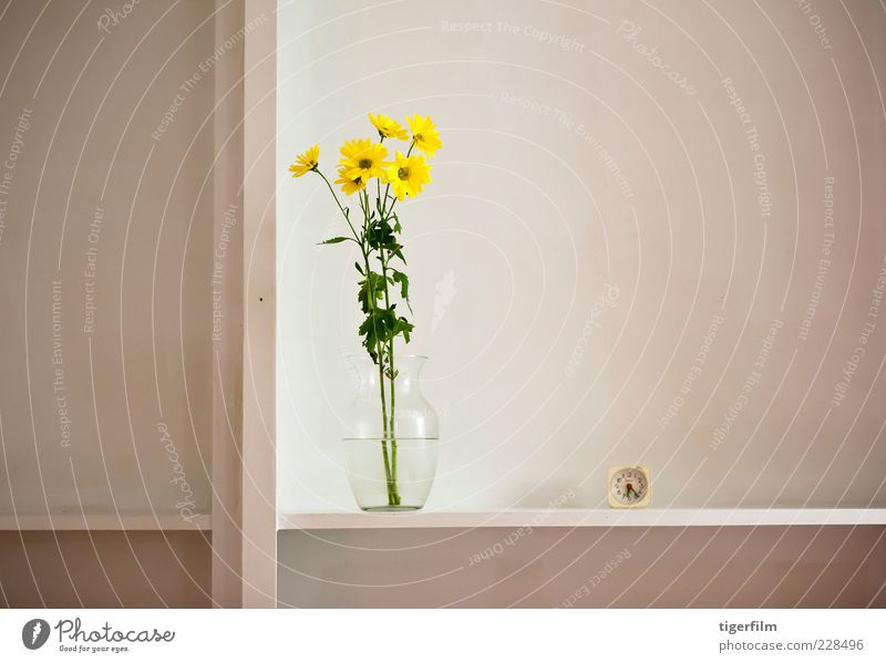 still life with daisies Yellow Daisy Family Marguerite Flower Plant Vase Water Clock watch six o'clock Shelves shelf Compass (drafting) Division Life