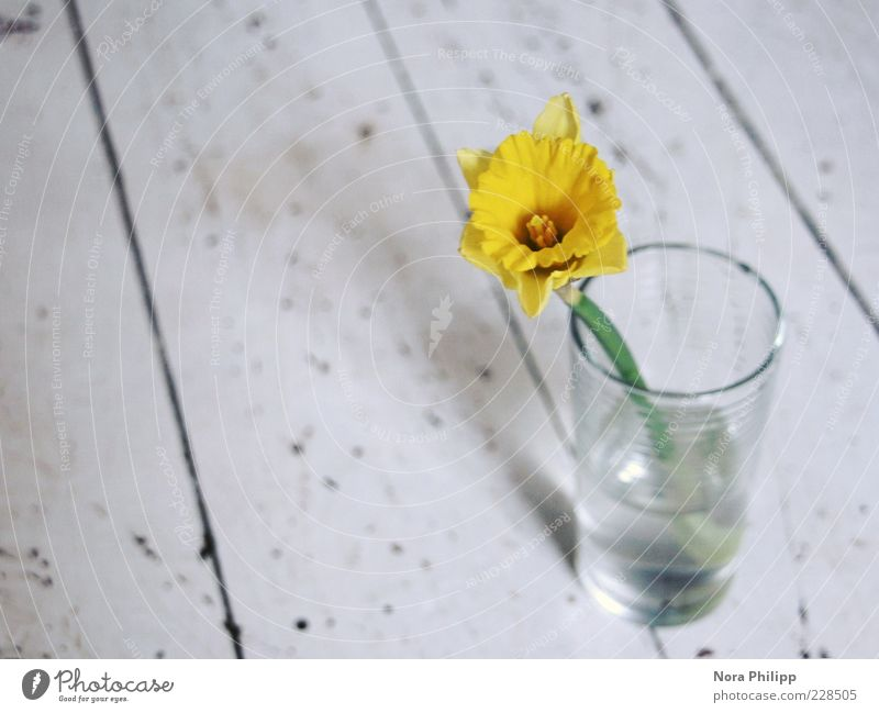 Nature Plant Beautiful Water White Flower Yellow Blossom Spring Decoration Glass Esthetic Blossoming Uniqueness Well-being Fragrance