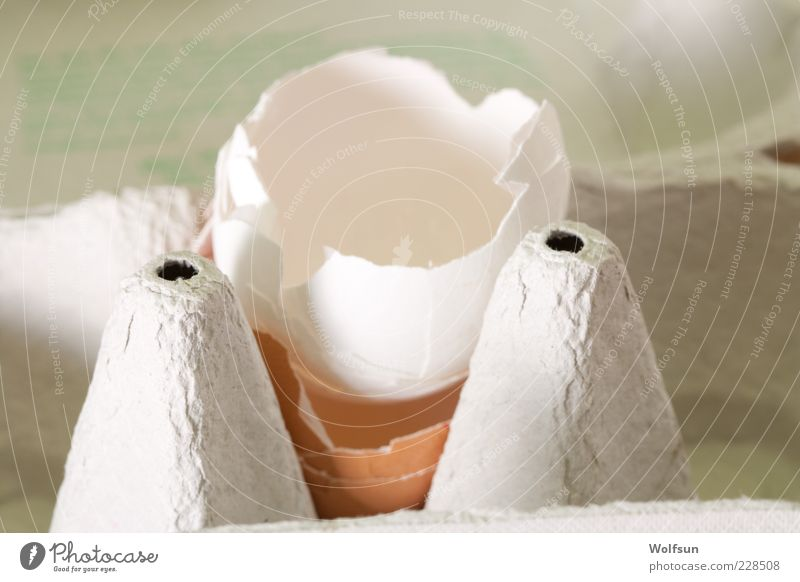 Eggs are from Food Nutrition Organic produce Packaging Broken Gray White Colour photo Interior shot Close-up Shallow depth of field Central perspective Struck