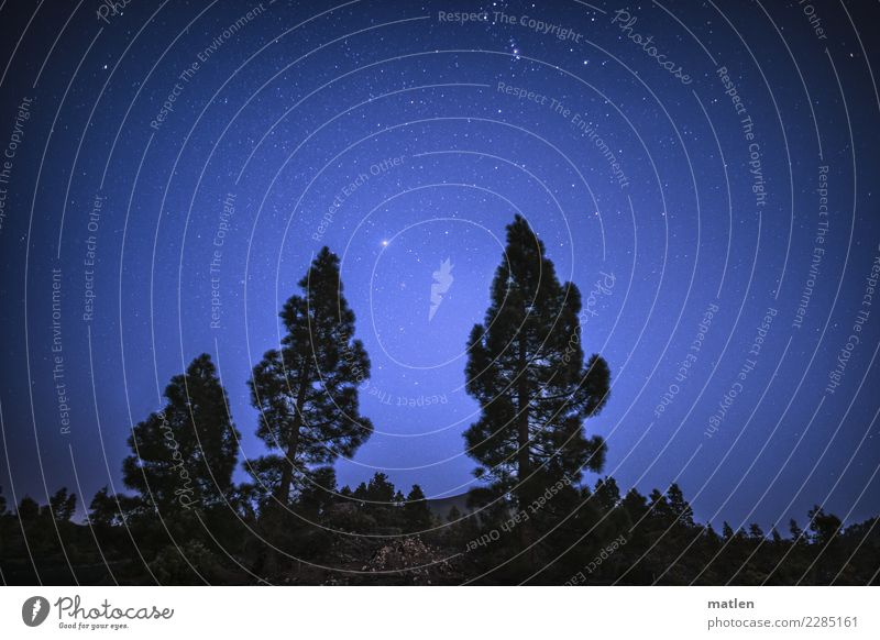 Sky Nature Plant Blue White Tree Black Cold Spring Brown Bushes Beautiful weather Stars Cloudless sky Starry sky Stone pine