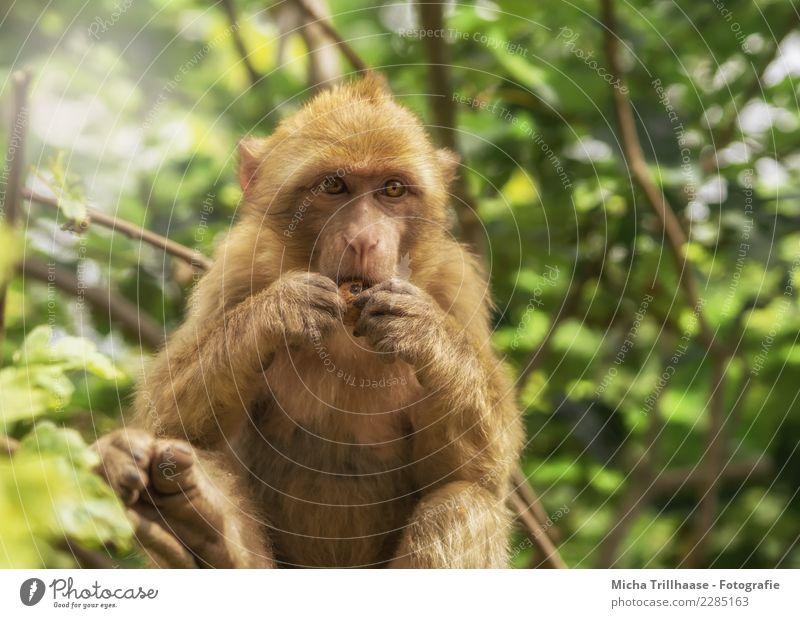 small snack Fruit Nut Walnut Nutrition Eating Healthy Eating Nature Animal Sun Beautiful weather Plant Tree Bushes Wild animal Animal face Pelt Monkeys