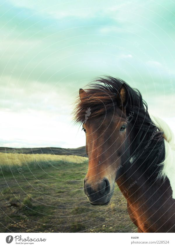Sky Nature Animal Clouds Landscape Meadow Natural Wind Wild animal Wild Wait Stand Esthetic Horse Friendliness Animal face