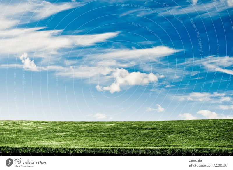 horizon Environment Nature Landscape Plant Sky Clouds Horizon Summer Climate Weather Beautiful weather Wind Grass Cornfield Grain Field Hill Blue Green White