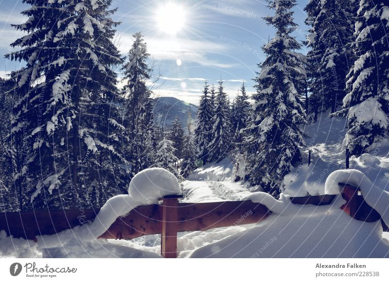 Snow with sun III. Environment Nature Landscape Plant Sky Sun Sunlight Winter Climate Weather Beautiful weather Fir tree Coniferous trees Forest Alps Mountain